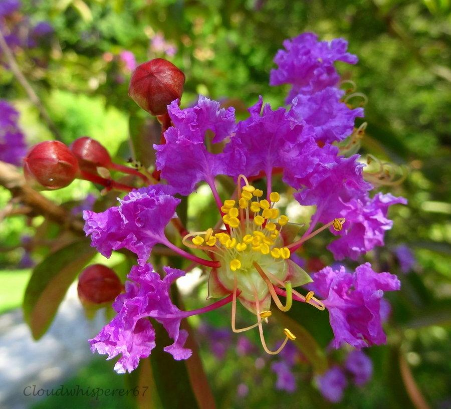 Top Amazingly Beautiful Purple Flowers