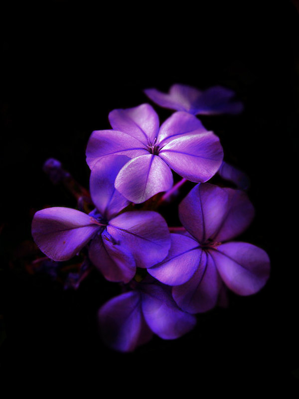 40+ Examples of Beautiful Purple Nature Colors Photography ...
