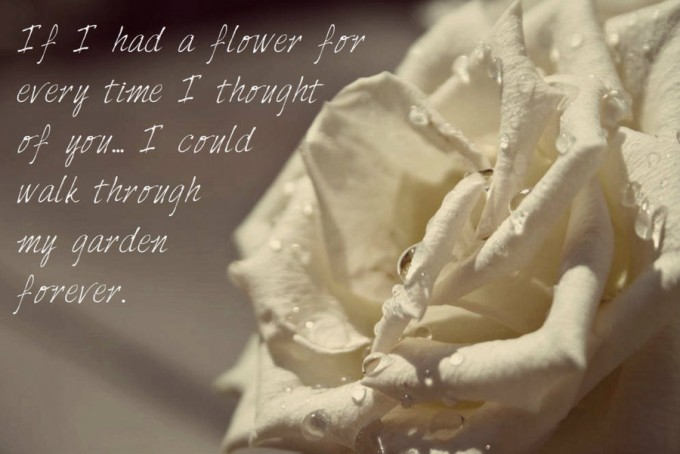 The White Rose Love Quote