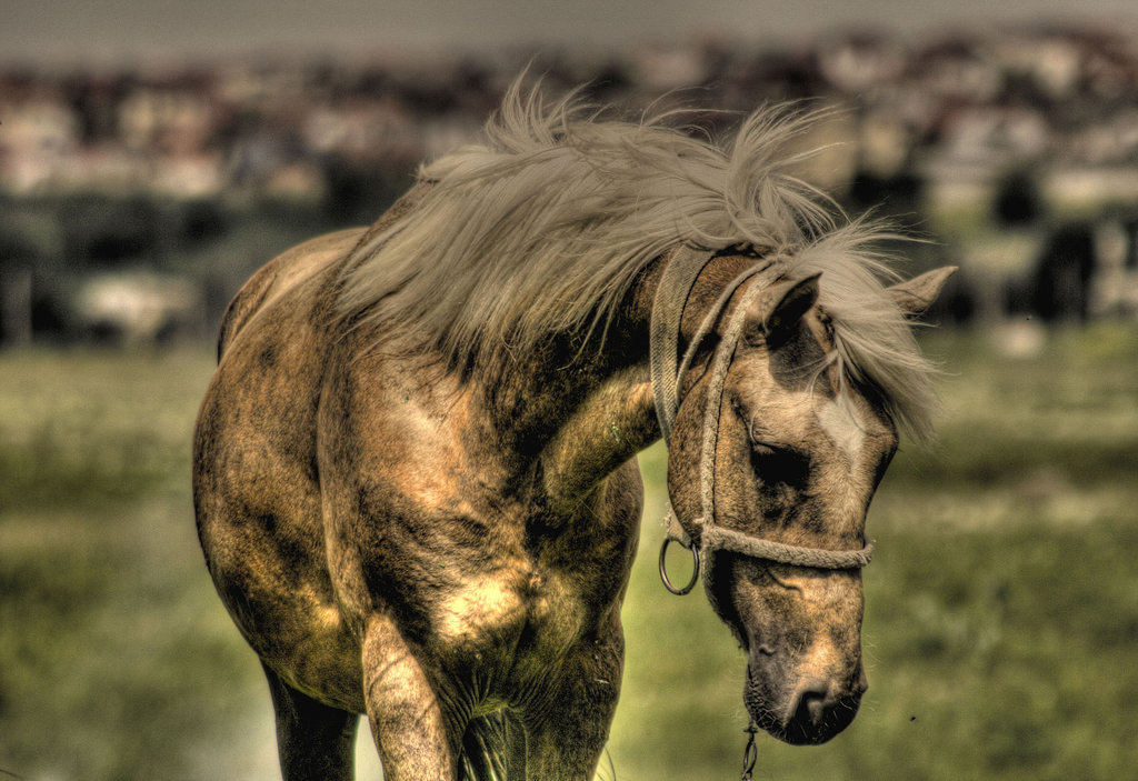 horse hdr