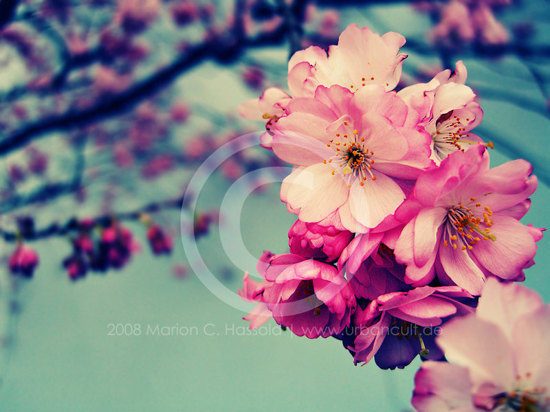 35 Spectacular Spring Photos Entertainmentmesh