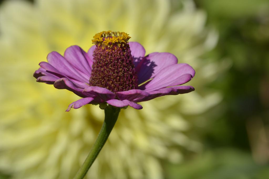 Beautiful Purple Petal Flower