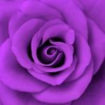 purple_by_purplerainistaken