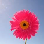 Flower_by_abender777