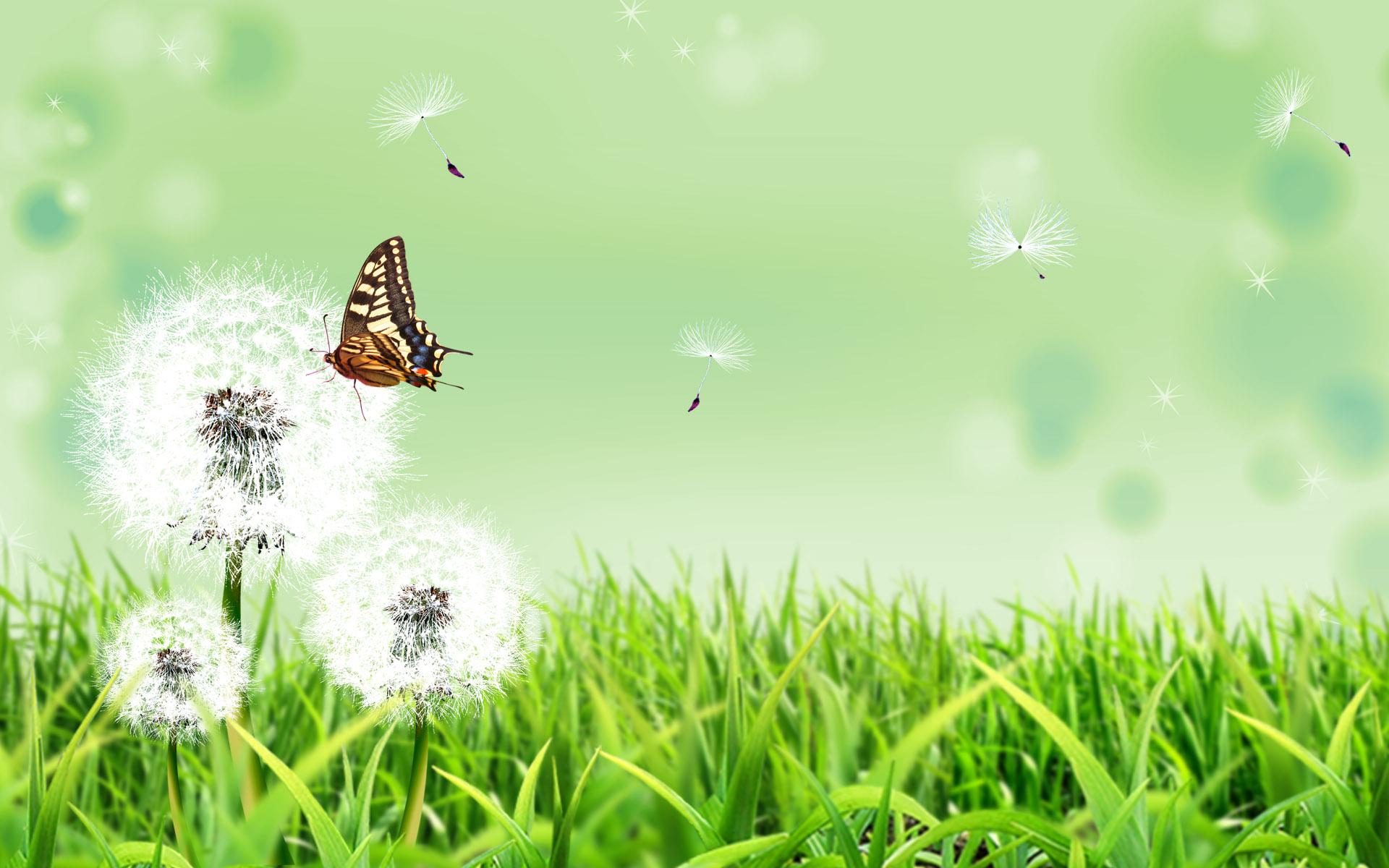 Nature Wallpaper Designs butterfly nature