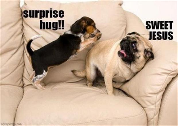 funny dogs surprise hug