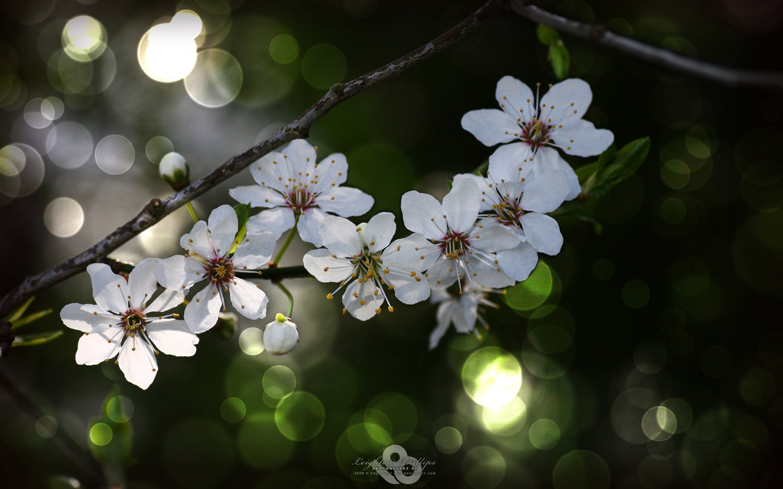 spring flowers wallpaper 17