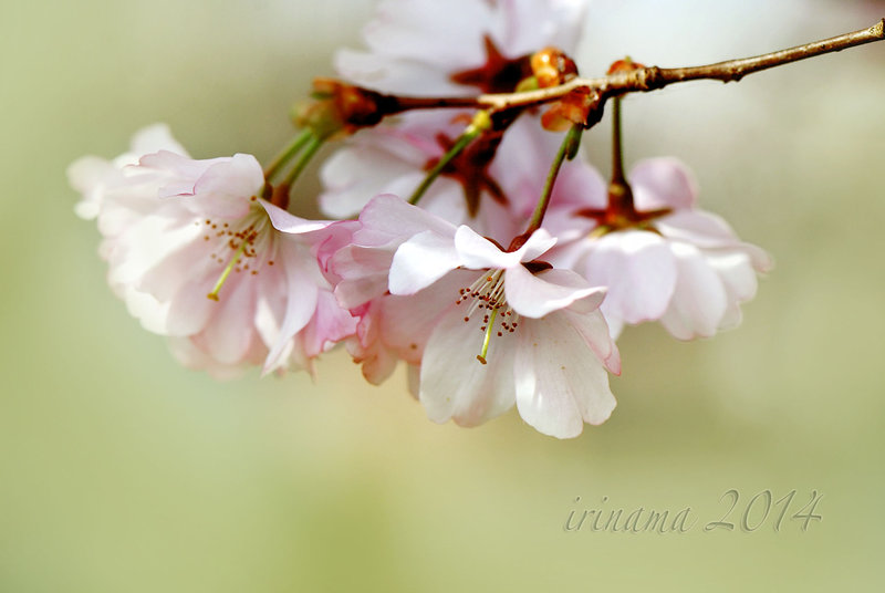 spring flowers wallpaper 22
