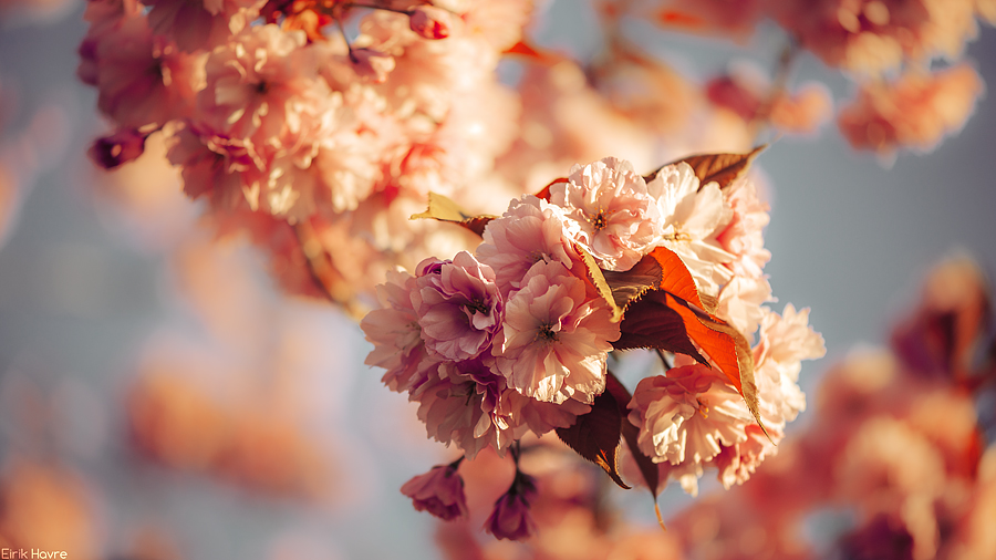 spring flowers wallpaper 23