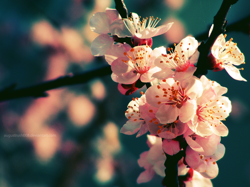 spring flowers wallpaper 4