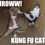 very funny cat and dog pics with captions