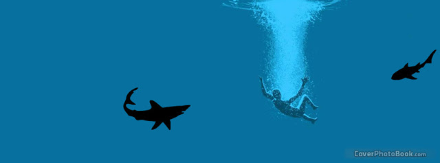shark attack cool fb cover photo