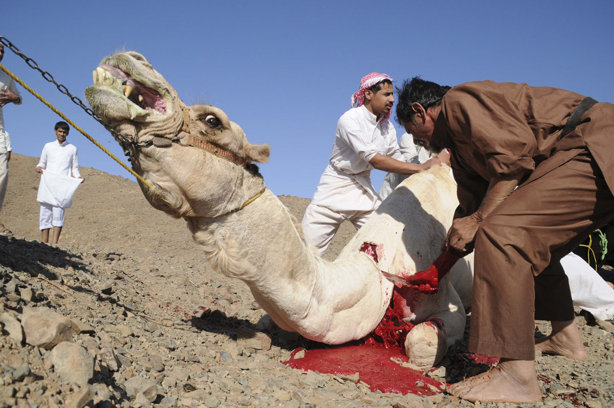 Eid-Ul-Adha-Camel-Sacrifice-hd-photo