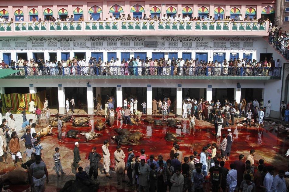 Eid Ul Adha animals sacrifice at Slaughter House Lahore Pakistan