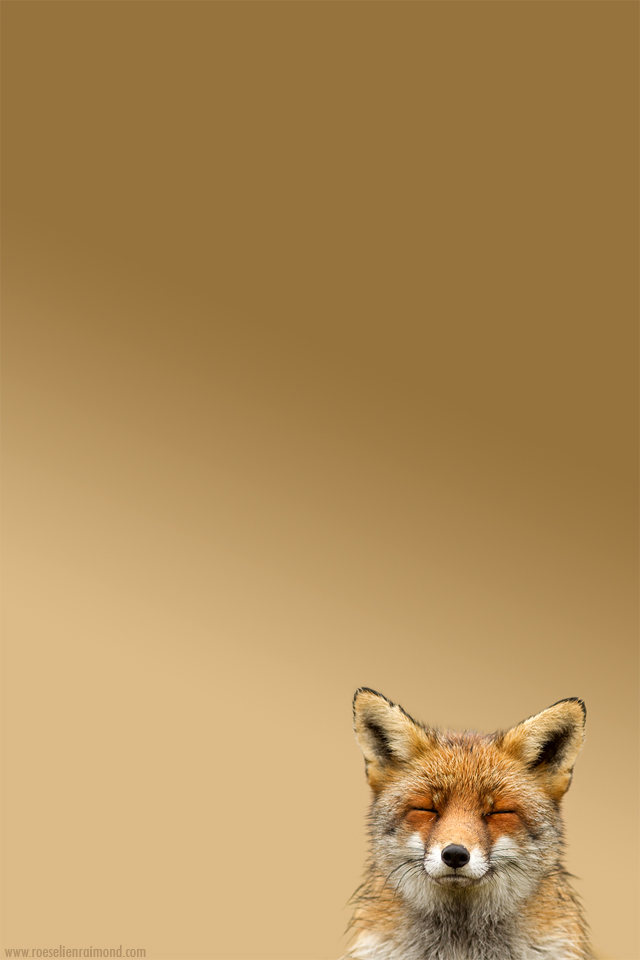 Happy Fox for your Iphone