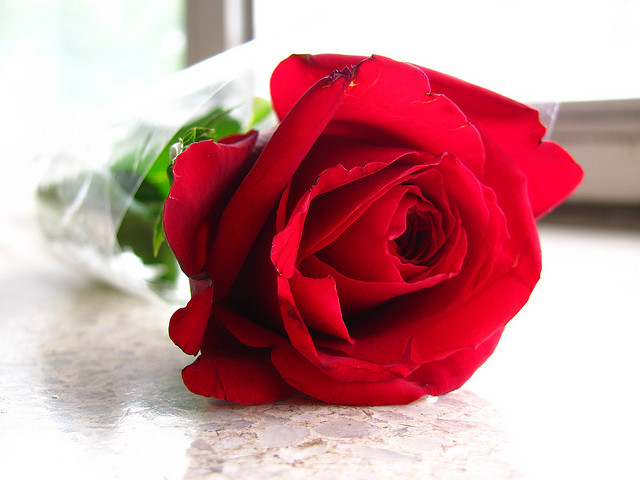lovely-love-rose