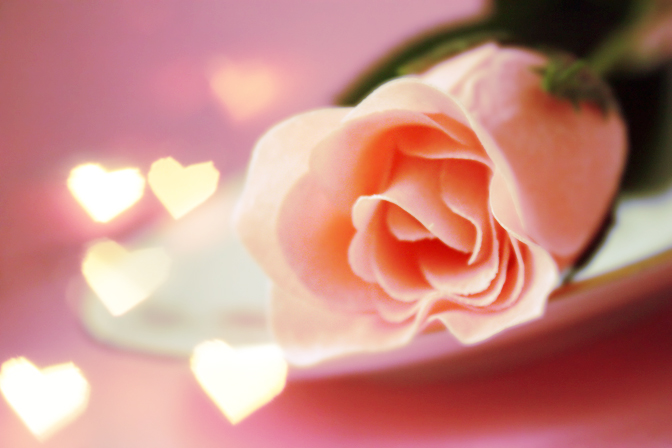 valentines-rose-picture
