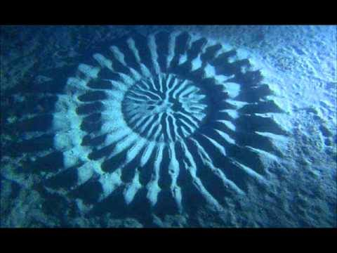 Underwater Crop Circles in the Ocean off Japan