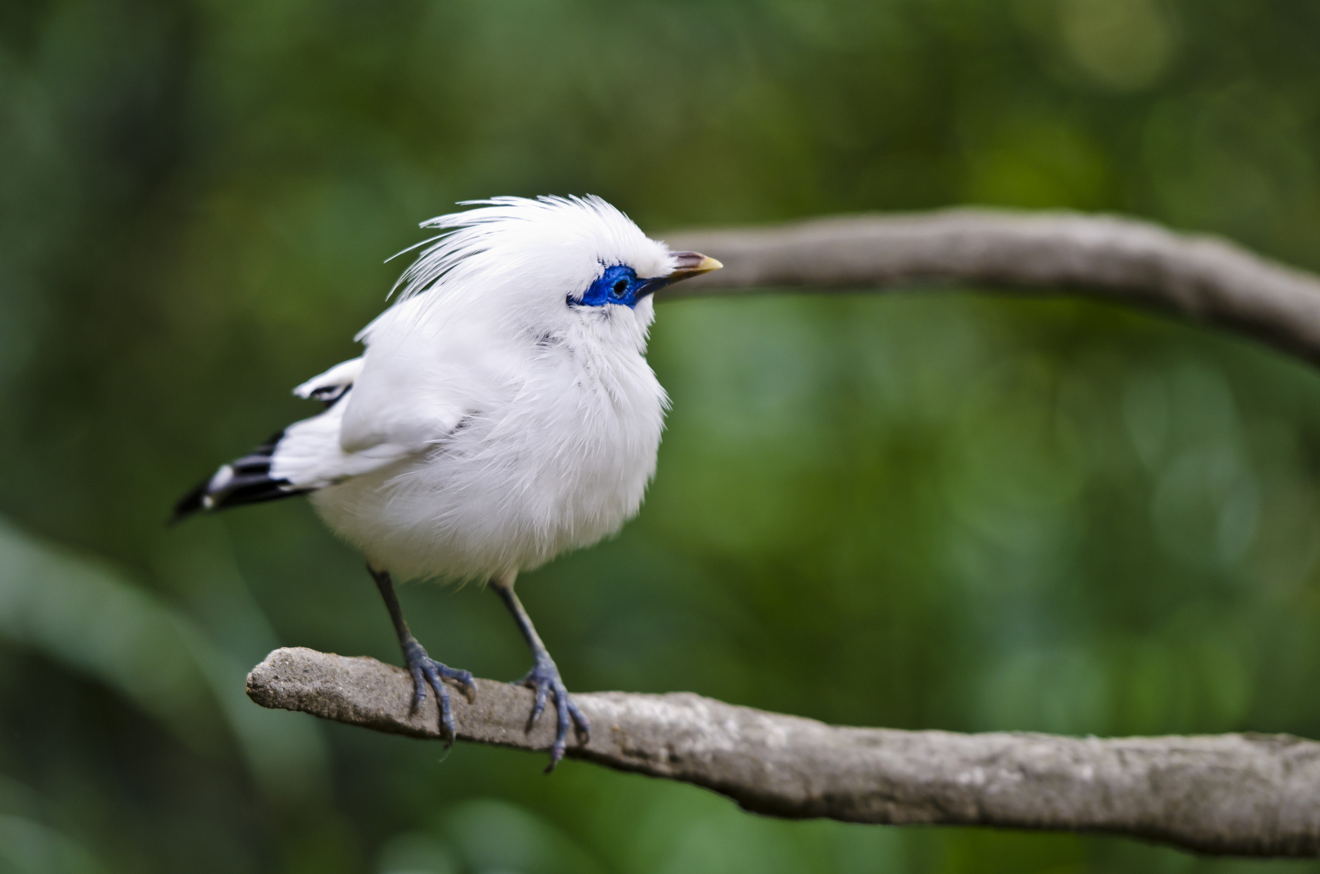 cute white blue color small bird