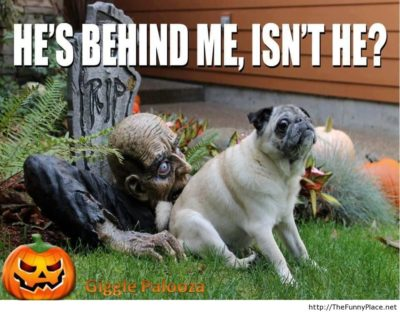 Halloween-funny-image-with-saying
