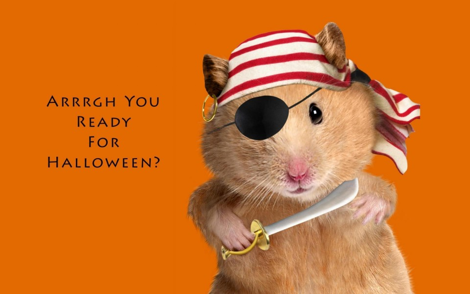 35 funny halloween memes pictures entertainmentmesh - Funny happy halloween wallpaper ...