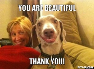 funny smiling dog thank you meme